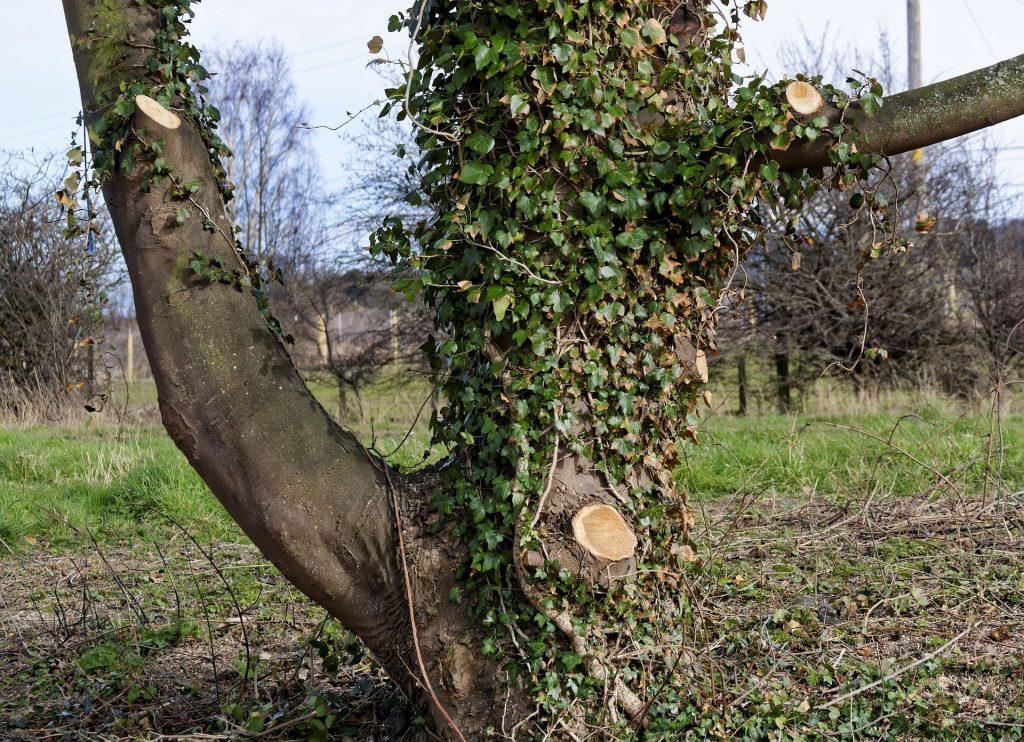 tree maintenance uxbridge