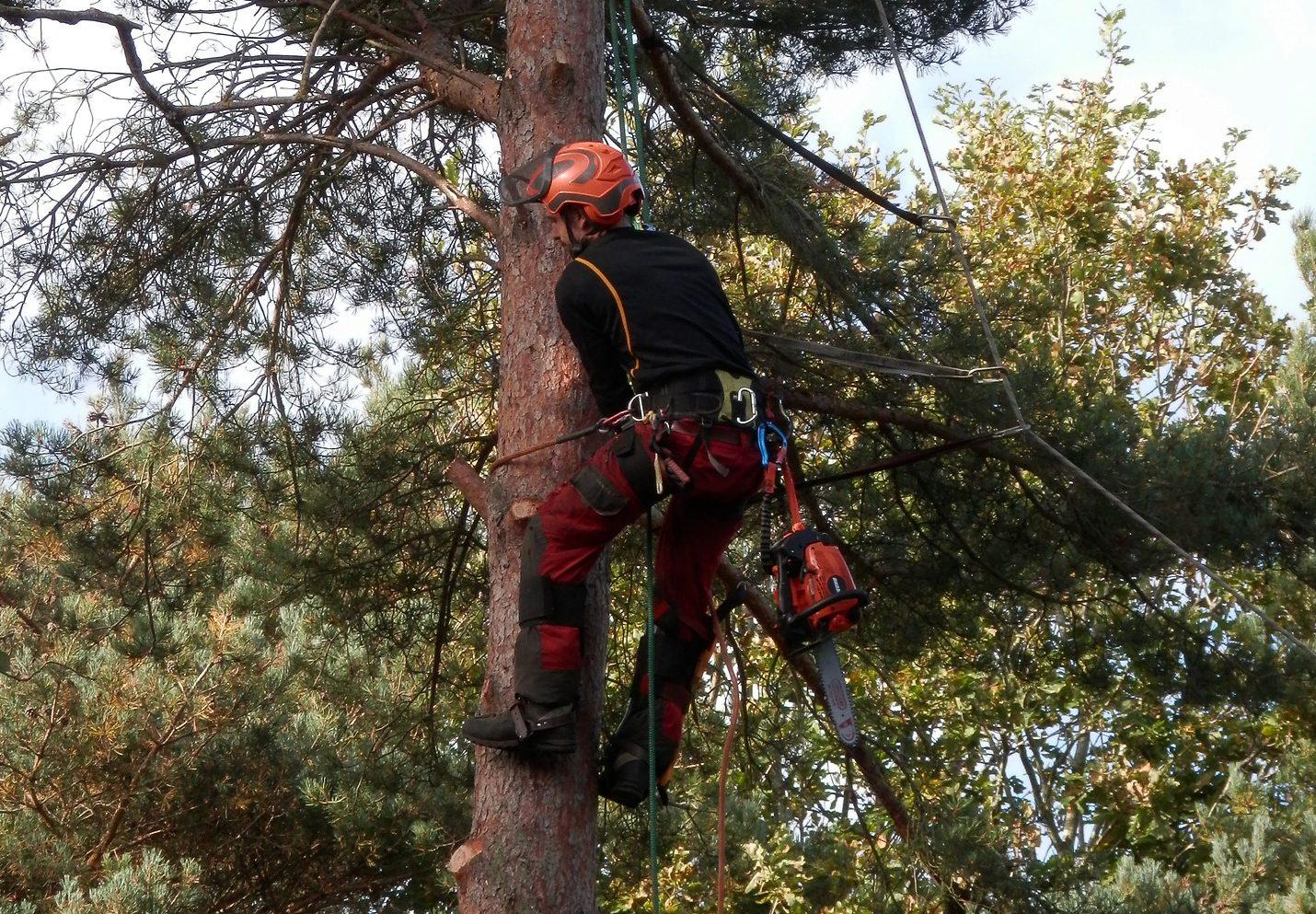 tree surgeon hillingdon